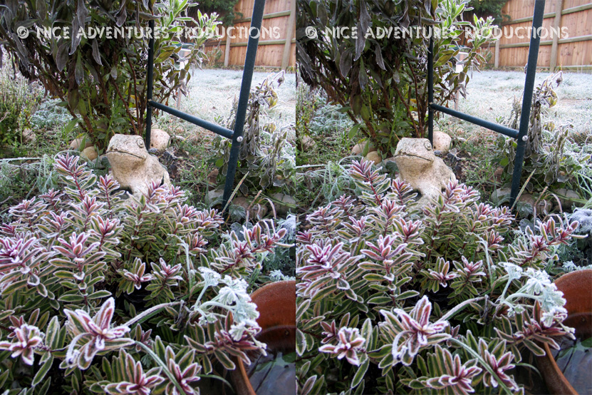 2018_Dec 25_Frosty Garden 1 3D nap